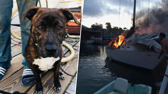 A dog was saved from a Sailboat on fire