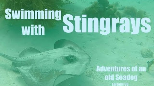 Swimming with Stingrays Adventures of an old Seadog, epi63