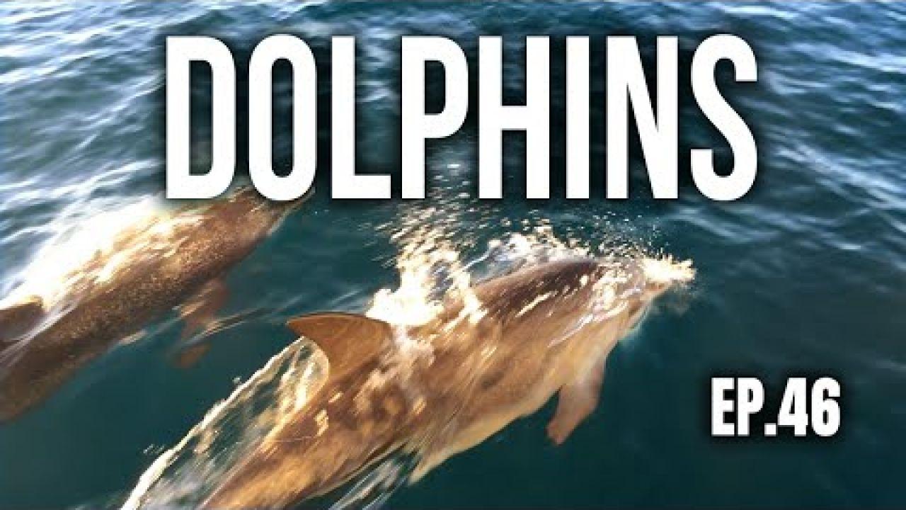 DOLPHINS | Sailing Balachandra E046