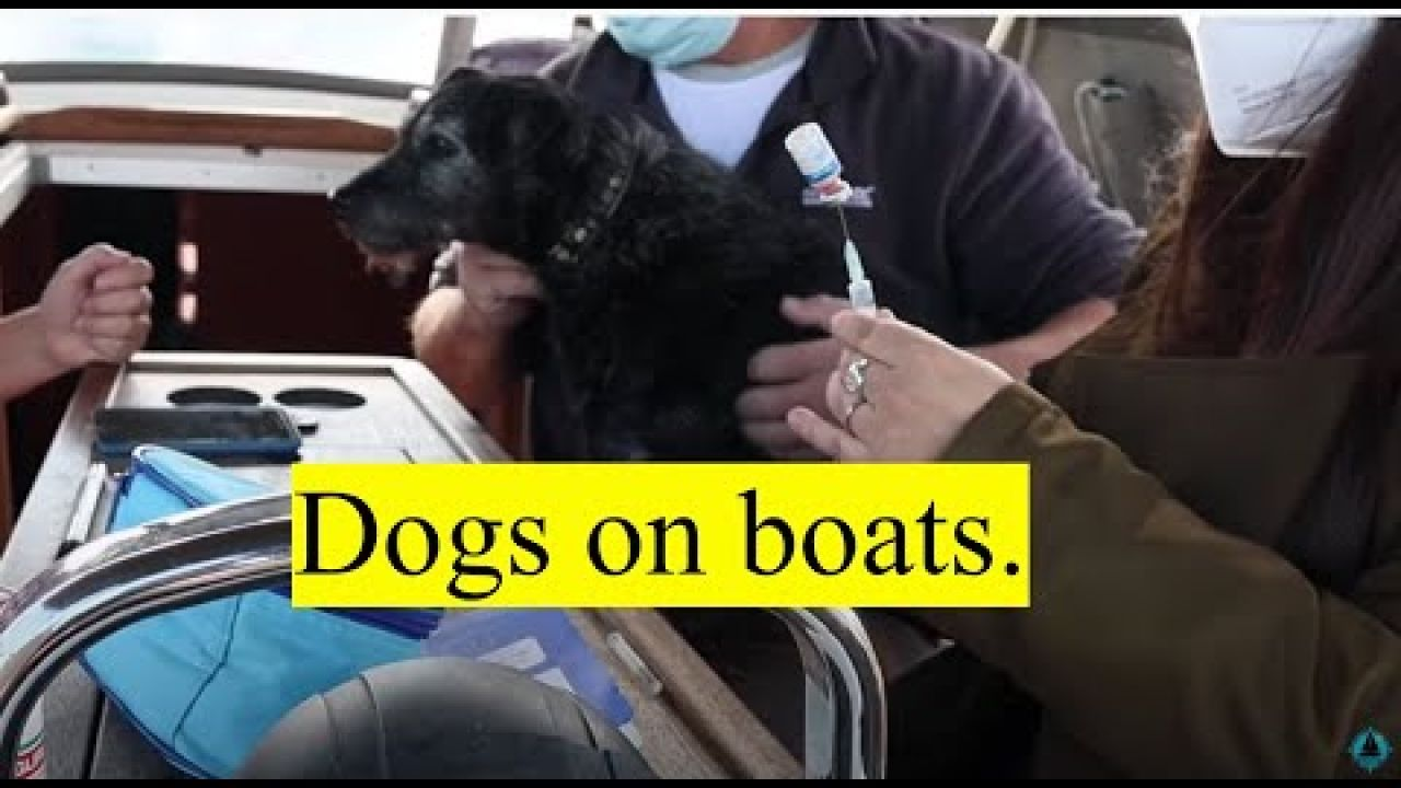 Dogs on Boats. OTB 083.