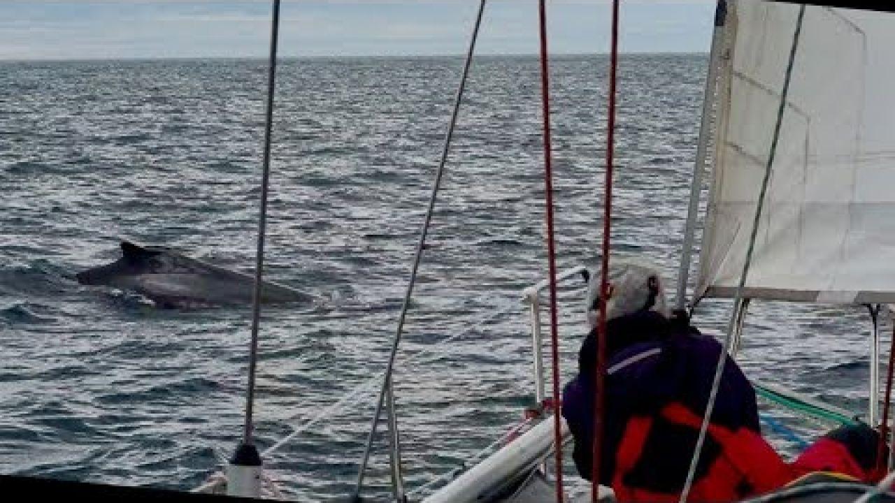 Segeln am Polarkreis #Ep27 oder Tanz mit den Walen